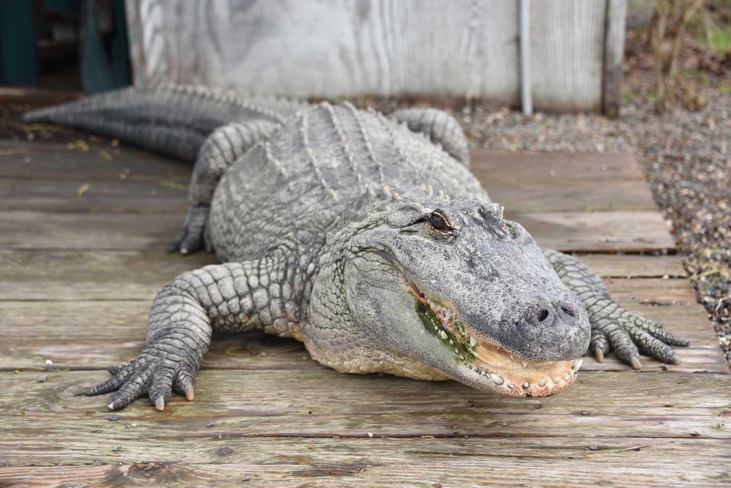 reptiles amphibians animals insects zoo